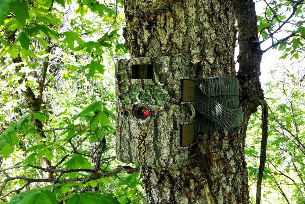 Best Long Range Wireless Trail Camera