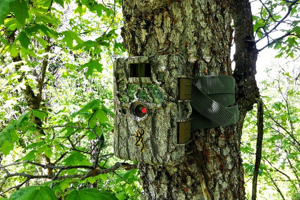 Best Long Range Wireless Trail Camera